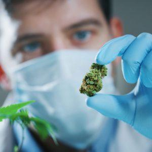 Le tétrahydrocannabinol (THC), le cannabidiol (CBD), le cannabinol (CBN) sont les cannabinoïdes les plus consommé pour des pathologie comme la dépression, le cancer, la sclérose en plaque ou le glaucome